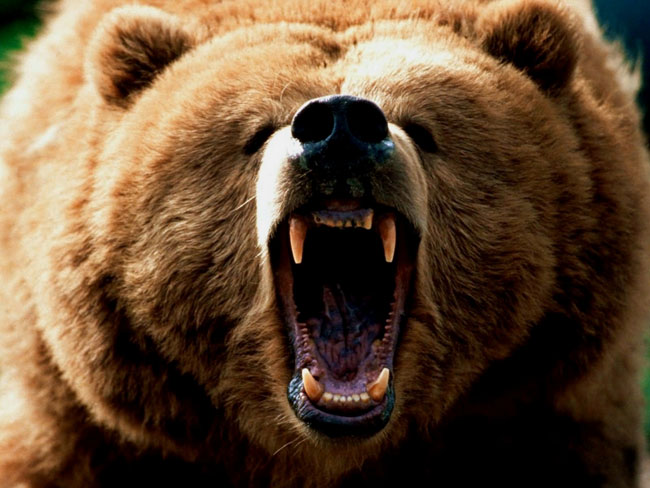 orso-grizzly-bear-killer-02